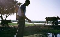 Index irrigation egypt2 large
