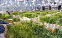 Index greenhouse grasses berkeley lab large