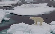 Aside_polar_bear_2511_large