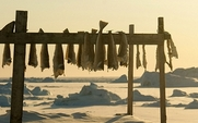 Aside_greenland_fishing_0112_large