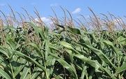 Aside gm crop 1801 large