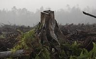 Index sumatra indonesia deforestation 2403 large