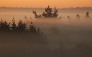 Aside_forest_redd_sunrise_politics_1504_large