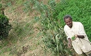 Aside ethiopia land grab farming 3004 large