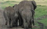 Aside india elephant waste paper large