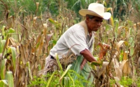 farmers latin singles And you can meet them right now, here on american dating composed of 50 states, 5 major states and a federal district, america has the world's largest economy full of celebrities, the latest fashion, models and of course people like you and me, looking for love.