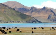 Aside tibet grassland desertification large