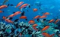 Index 960coral fish large