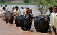 Index pakistan floods climate adaptation large