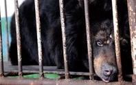 Index black bear large