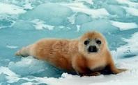 Index seal trade canada large