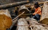 Index_sichuan_deforestation2