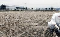 Index fukushima nuclear radiation test