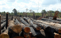 Index 426 deforestation