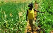 Aside 426 africa agri