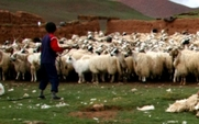 Aside 426 herders closer