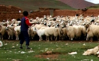 Index 426 herders closer