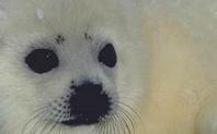 Index 426 seal close