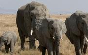 Aside elephant1