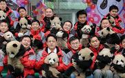 Aside 426 pandas