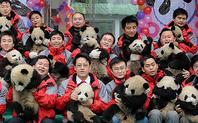Index 426 pandas