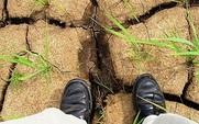 Aside drought grass 426