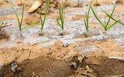 Aside problem pesticide