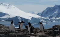 Index antarctica