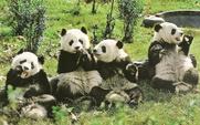 Aside panda