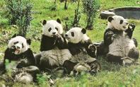 Index panda