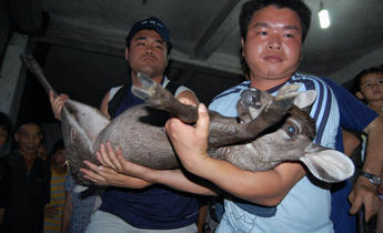 Aside cd1g3y  members of animal conservationists group confiscate a reindeer from hainan market