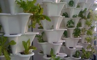 Index urban farming