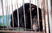 Aside black bear