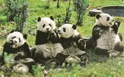 Aside pandas