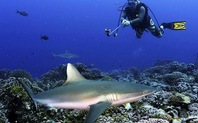 Index sharkfin