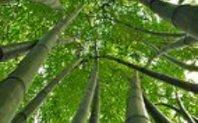 Index tangled bamboo homepage