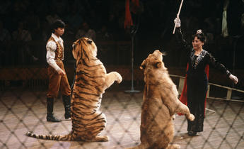 Aside hb0g5d china s circus animals