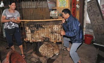 Aside w8we5t dog meat festival in yulin