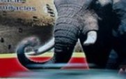 Aside elephant poster