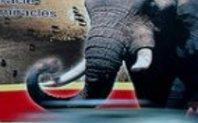 Index elephant poster
