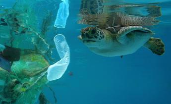Aside j7ydjy  turtle garbage ocean