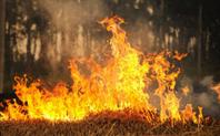 Index straw burning