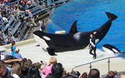 Aside 640px orcas at seaworld show meitu 1