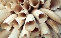 Index ivory