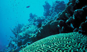 Aside coral reef