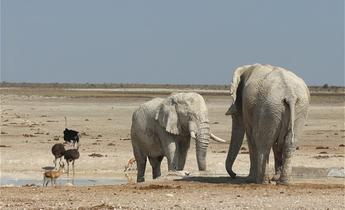 Aside elephants in etosha namibia meitu 1