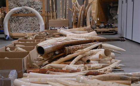 Sidebar carved ivory tusk stockpile  meitu 1