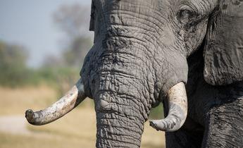 Aside elephant 1022419 1280