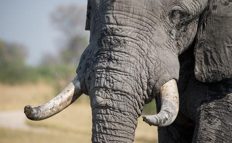 Sidebar elephant 1022419 1280