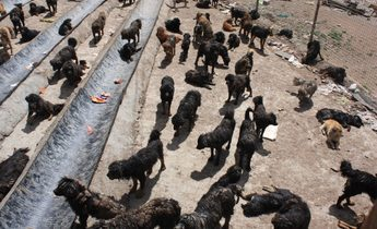 Aside img 5425dogs mix at a shelter for strays in maozhuang august 26 2016 1020x680